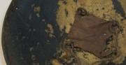 Tarcza indoperska DARQE - XVIII-XIX w. [od góry: stan przed oraz po konserwacji i restauracji]